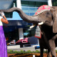 The elephant really made the opening of a children's hospital unforgettable.